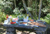 Littlewood Tours Forest Picnic